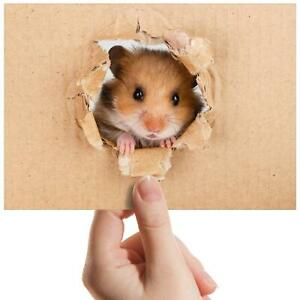 "Hamster Mice Rodent Rat Gerbil Small Photograph 6""x4"" Art Print Photo Gift #8521"