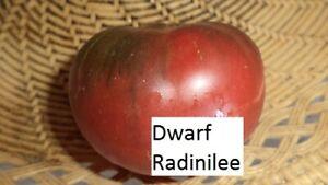 Dwarf-Radinilee-10-Tomaten-Samen-Ernte-2019-aus-bio-Anbau-Nr-196