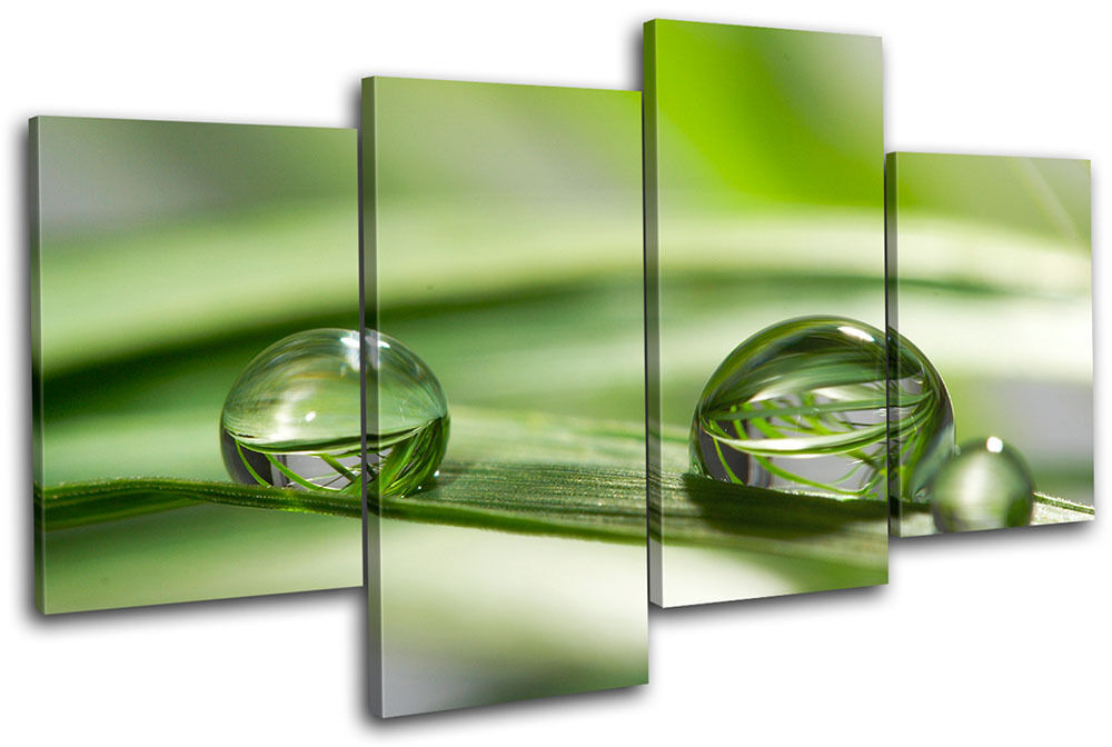 Droplets Grass Green Floral MULTI Foto LONA pared arte Foto MULTI impresion d86a0d