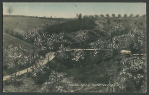 Vevay IN: c.1910 Hand-Colored Postcard HORSE SHOE BEND - Note the Hill Orchard