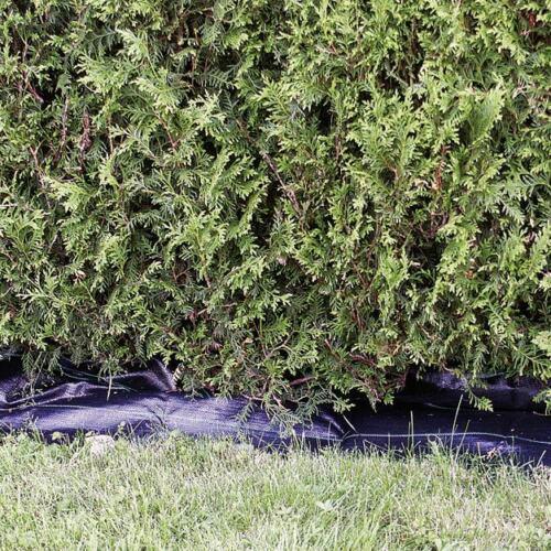 Prima Flora Heckenvlies 0,5 x 20 m