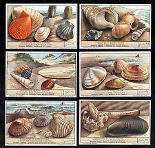 Sea Shells Liebig Cards Set 1950 Mollusc Shellfish Crab Welk Cockle Mussel Clam