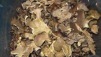 2 Oz. Maitake, Oyster, Crimini Mix, Medicinal & Gourmet Dried Mushrooms