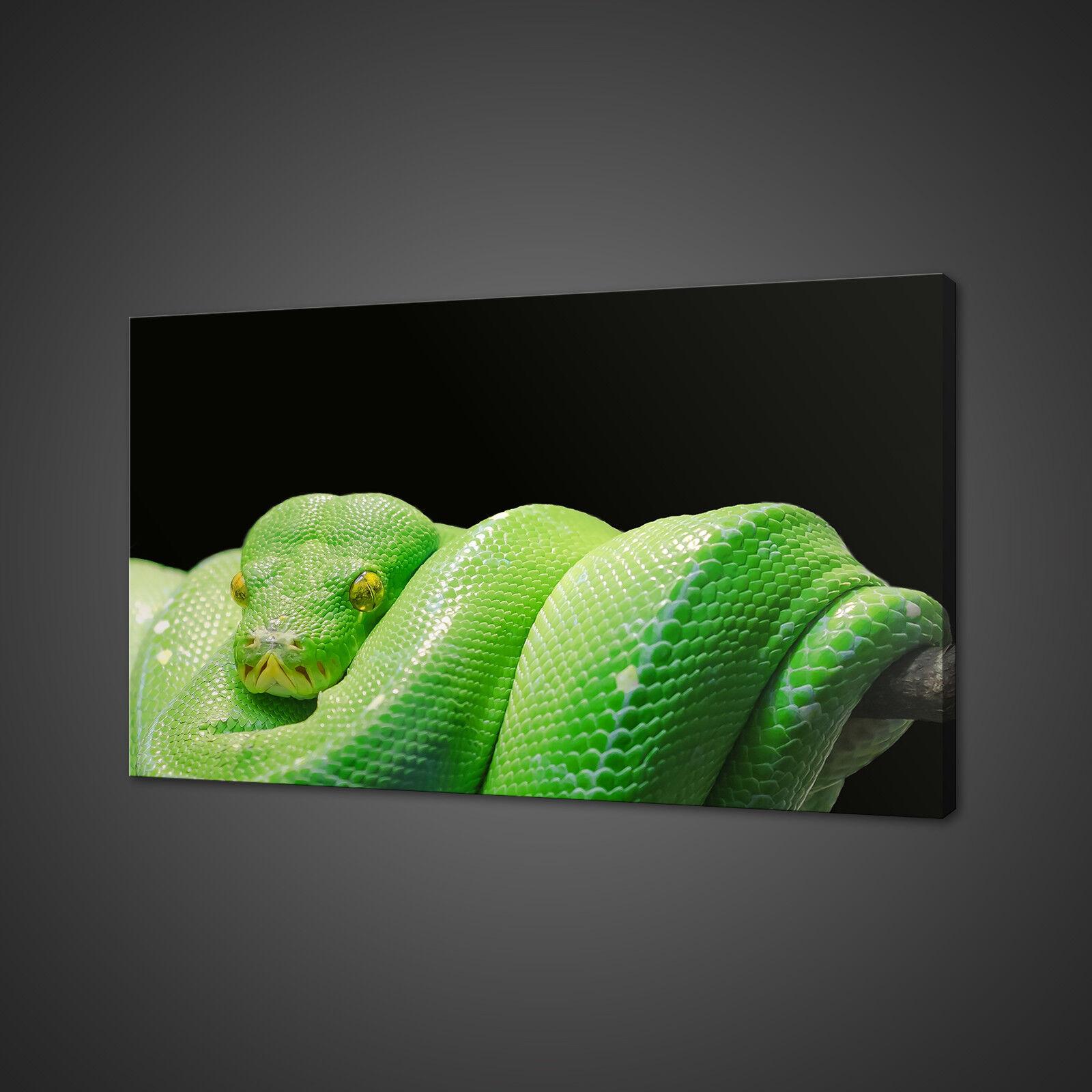 BELLISSIMO ALBERO verde Python serpente animale stampa art. a muro FOTO PHOTO