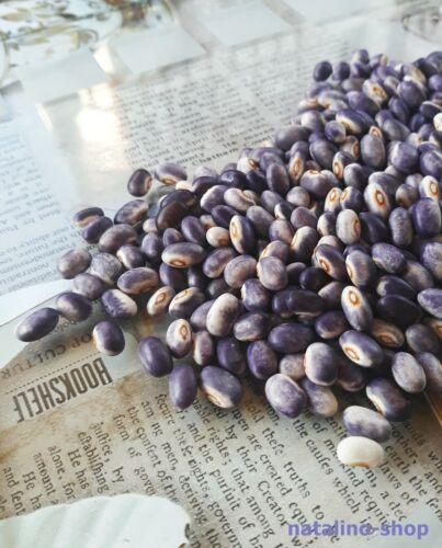 Buschbohne *Blooming Prairie* 10 Samen *Buschbohnen Samen *Bean seeds
