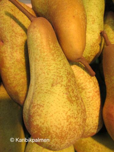 große Birnen Früchte winterharte Pflanze 150-170cm Birnbaum  /'Abate Fetel/'