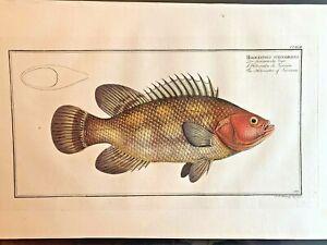 1st-EDITION-BLOCH-OBLONG-FOLIO-H-C-RARE-FISH-HOLOCENTRE-OF-SURINAM-243