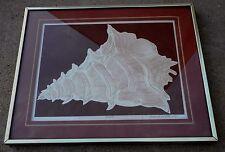 """Vintage 1982 David Allgood Embossed Serigraph """"Conch"""" Art Signed COA Framed"""