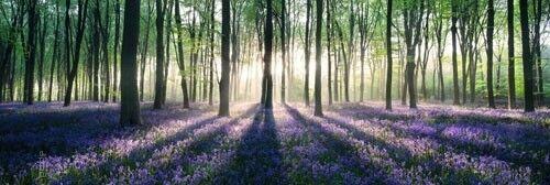 XXL-Poster Traumhafter Blumenwald Wald Blume Sonnenschein Jumboposter 158 x 53cm