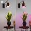 thumbnail 3 - GE Lighting LED Grow Light for Indoor Plants BR30 Bulb 9W Full Red Spectrum SALE