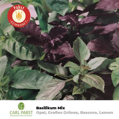 Ocimum sanctum Rama Tulsi Basilikum 20+ Samen Saatgut – Seeds