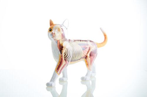 Mighty Jaxx 4D Master Anatomical Yellow Cat Orange Cat Designer By Jason Freeny