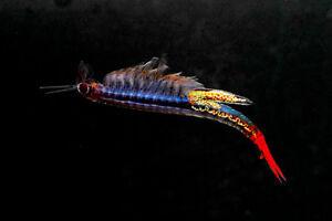 Brine-Shrimp-Alternative-3-g-Live-feed-for-Betta-Guppy-Discus-Tropical-fish