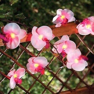Solalux Set Di 12 Orchidea Fiore Da Giardino Solare Lanterna Stringa Fata Luci Lampade- Da Processo Scientifico