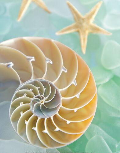Seaglass 2 by Alan Blaustein 11x14 Starfish Ocean Shell Poster BEACH ART PRINT