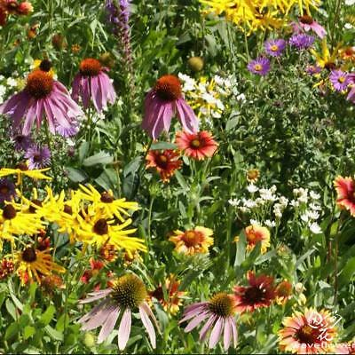 500 pcs Wildflower /'Fast growing Mixed/' flower seeds #W01