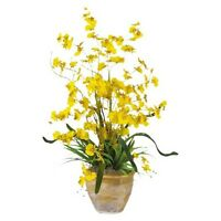 Dancing Lady Orchid In Ceramic Pot 26 - Assorted Colors