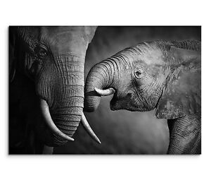 leinwandbild 120x80cm auf keilrahmen schwarz wei grau elefant baby r ssel ebay. Black Bedroom Furniture Sets. Home Design Ideas