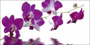 Wandbilder selbstklebend Monet Botanik Blumen Orchidee Fotografie Lila B9RC - Aachen, Deutschland - Wandbilder selbstklebend Monet Botanik Blumen Orchidee Fotografie Lila B9RC - Aachen, Deutschland