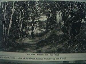 postcard unused 1008 fairlight woods nr Hastings - Leicester, United Kingdom - postcard unused 1008 fairlight woods nr Hastings - Leicester, United Kingdom