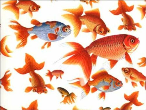 Goldfish Gold Fish Pet background Edible CakeTopper Wafer Icing Decoration