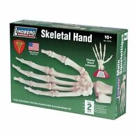 Lindberg Life Size Articulated Skeletal Hand Model Kit 1/1