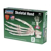 Lindberg Life Size Articulated Skeletal Hand Model Kit 1/1