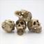 Resin-Skull-Aquarium-Decoration-Terrarium-Reptile-Cave-Fish-Tank-Ornaments-New thumbnail 1