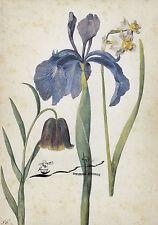 Kunstkarte: Georg Flegel - Iris, Narzisse, Fritillaria