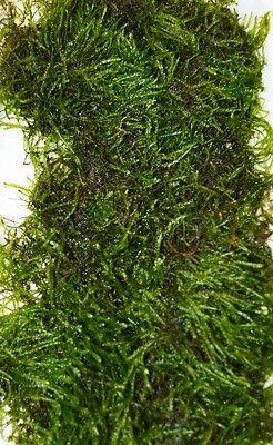250g JAVA MOSS live aquarium carpet plant bogwood ornament nano fish fry hide