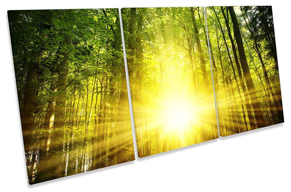 Grün Forest Gelb Sunset Framed CANVAS Drucken TREBLE Wand Kunst