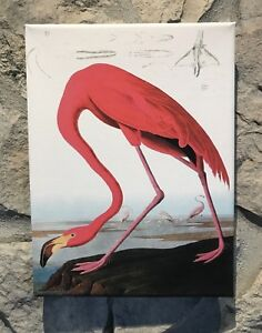 Image Is Loading Audubon 034 Pink Flaming Bird Wood Stretched