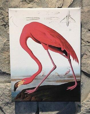 "Audubon /""GREAT BLUE HERON/"" Bird Wood Stretched Full Color Art Canvas Print New"