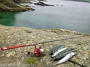 Amical Beach Fishing Rod & Reel Sea Rod Travel Tige Telescopique Rod Spinning Rod Surf Rod-afficher Le Titre D'origine