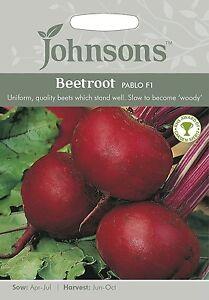 - 20 seeds BEETROOT ..performance /& quality Golden Globe Hybrid BOLDOR