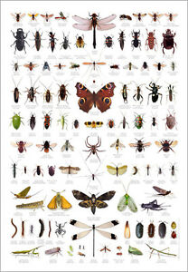 Image Is Loading Bugs Insects Identification Chart Wildlife Nature Poster