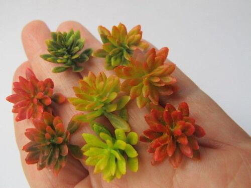 1 miniature Plante grasse chaud froid Divers Nuance Bush Doll House Garden S1