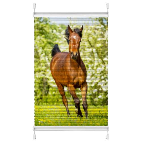"""Plissee Motiv /""""Pferd auf der Wiese/"""" Maßanfertigung ohne Bohren Klemmfix"""