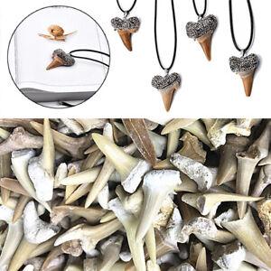 Natural-Shark-Tooth-Fossil-Animal-Bone-Specimen-DIY-Necklace-Crafts-Home-Decor