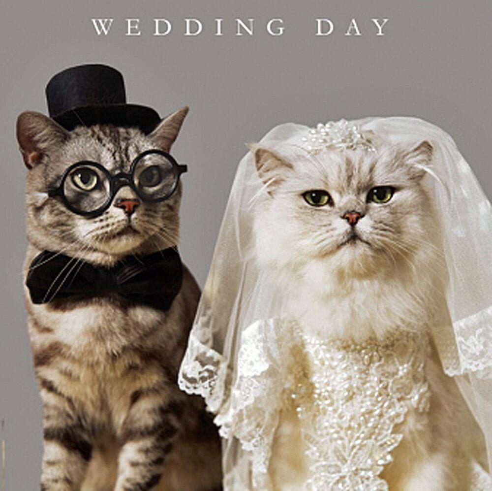 Wedding Day Congratulations Card Funny Bride & Groom Cats ...