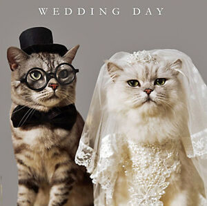 Wedding day congratulations card funny bride groom cats luxury image is loading wedding day congratulations card funny bride amp groom junglespirit Images