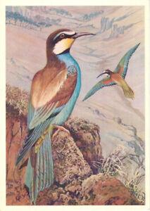 Russian-postcard-Beautiful-bird-European-Bee-Eater-drawing-by-V-Yegorov