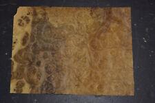 Oregon Myrtle Burl Raw Wood Veneer Sheet 75 X 10 Inches 150th 7681 23