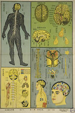Framed Vintage Chinese Medical Print – Nervous System (Picture Anatomy Body Art)