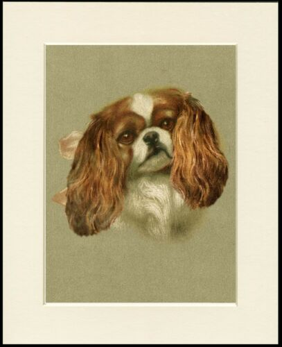 CAVALIER KING CHARLES SPANIEL CHARMING HEAD STUDY DOG PRINT READY TO FRAME