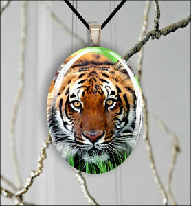 TIGER-FACE-ASIA-WILD-LIFE-OVAL-CABOCHON-GLASS-PENDANT-tfg4Z