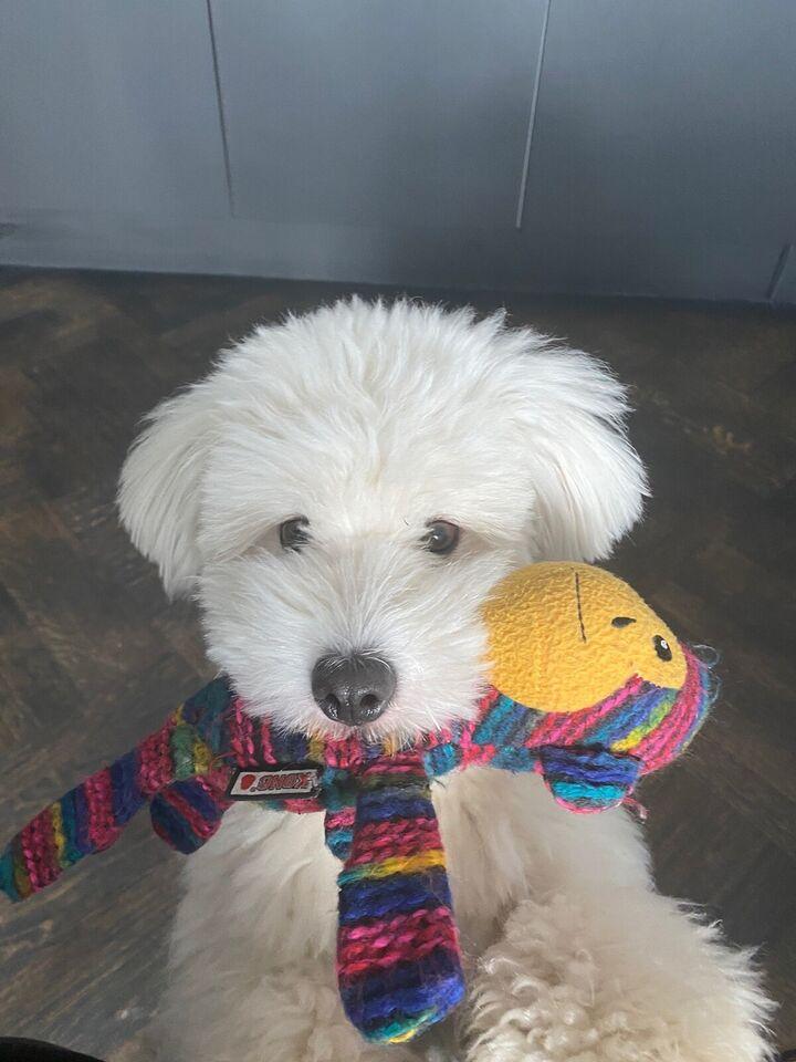 Hundepasning , tiltrædelse Straks
