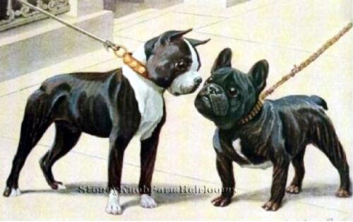 Boston Terrier /& French Bulldog ~ Vintage Dogs ~DIY Counted Cross Stitch Pattern