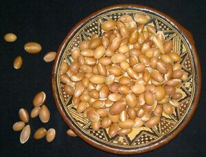 Graines d'arganier - Argania spinosa - 10 graines