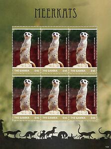 Gambie-2014-neuf-sans-charniere-suricates-6v-m-s-ii-animaux-sauvages-faune-Suricata-suricatta